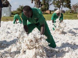 XYWORKXY_cotonea-herkunftsland-bio-baumwolle-uganda-teaser